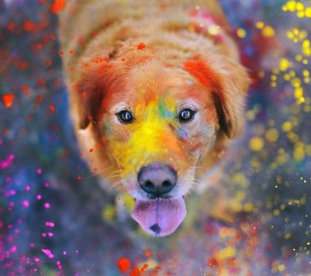 Colorful Dog Wallpaper Colorful Dog Dog Wallpaper Giant Dogs