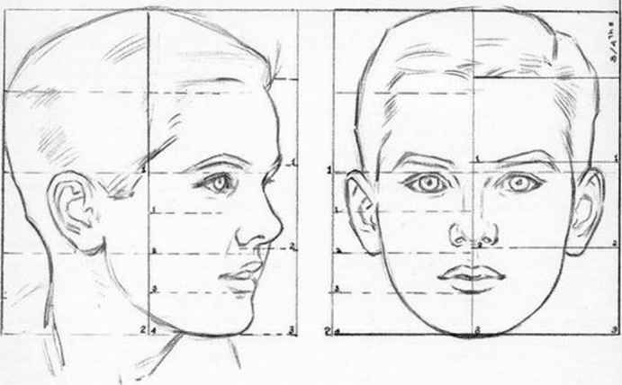 1807_236_169-proportions-heads-and-faces.jpg (691×428)