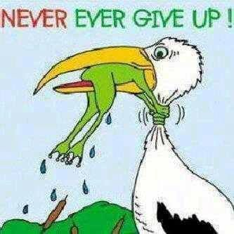 never ever give up...