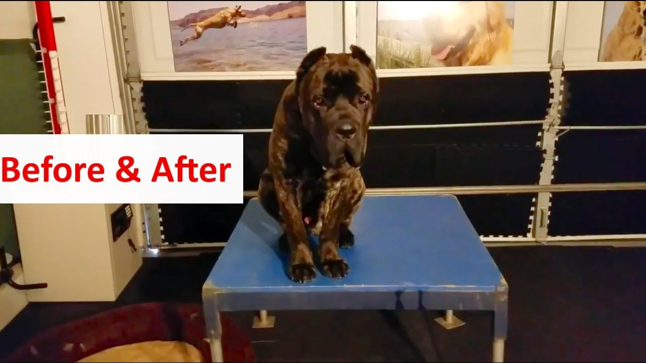 Columbus Ohio Dog Training Before After With Roofus The Cane