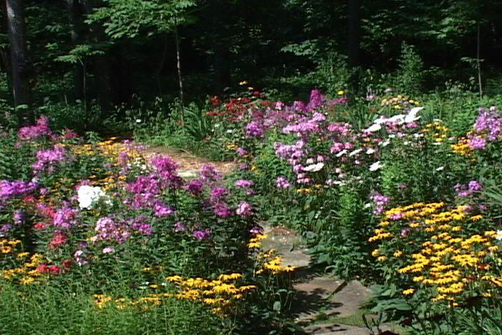 wild flower garden design idea Wild flowers are so
