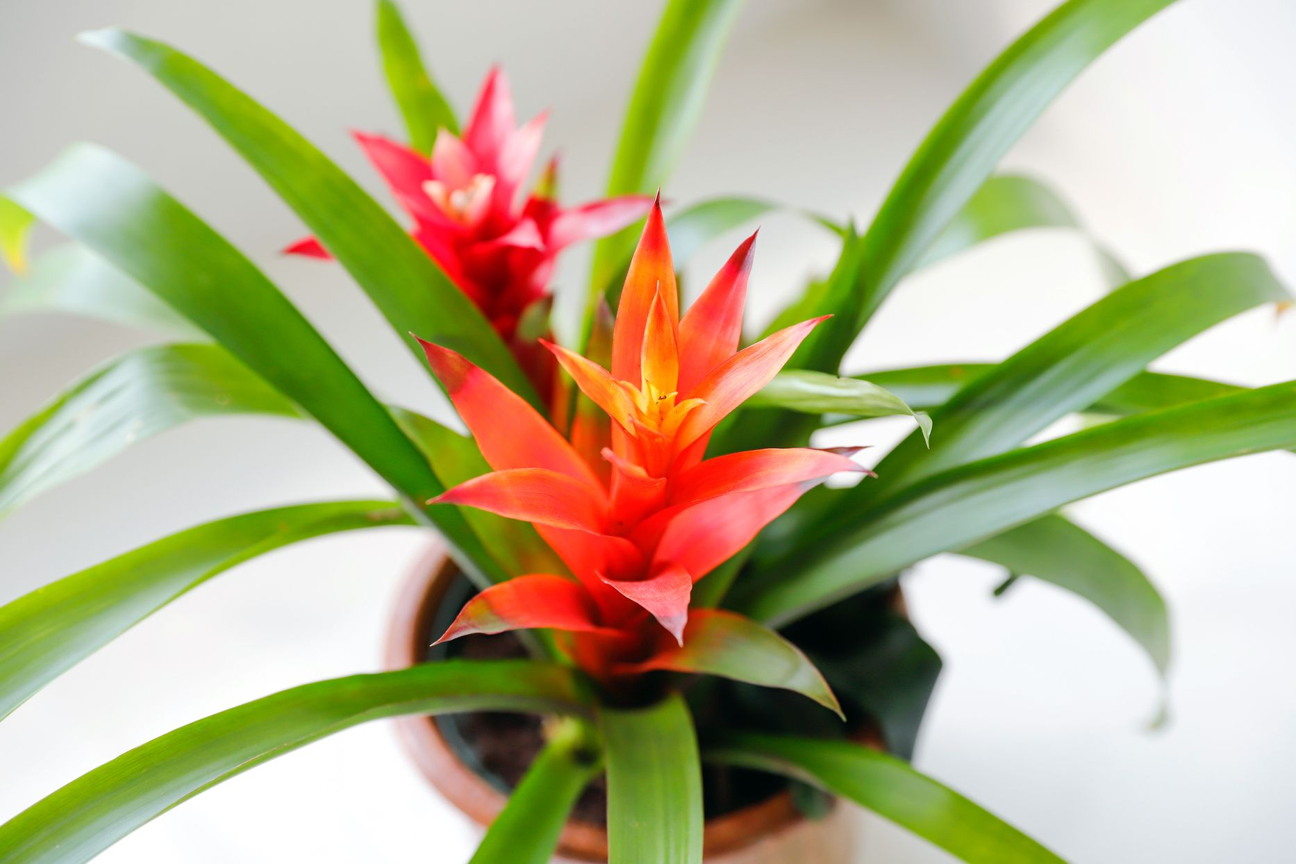 10 Sculptural Houseplants That Add Character To Any Space Indoor Flowering Plants Flowering House Plants Plant Care Houseplant