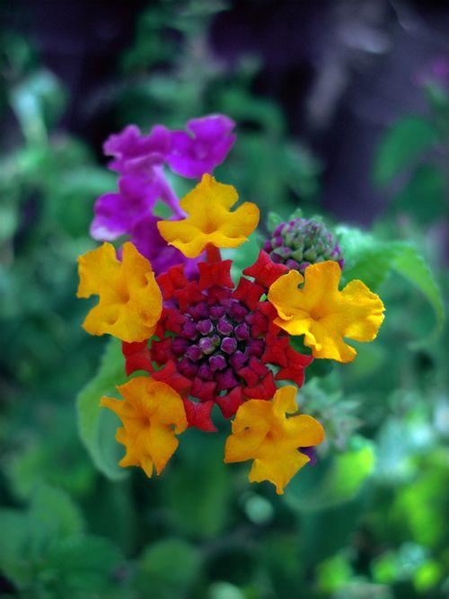 flower 061 by discret