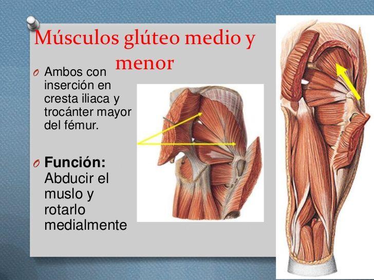 Pin de Juan Manuel García Guzmán en anatomía humana | Pinterest ...
