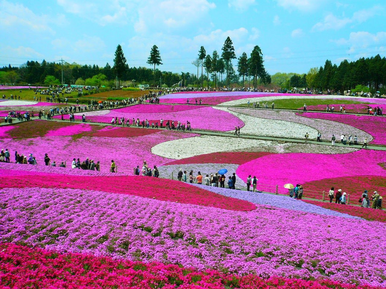 The most beautiful flower fields in the world