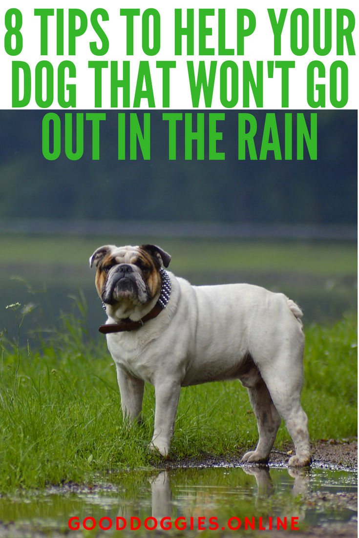 8 Tips To Help Your Dog That Won T Go Out In The Rain Dog Safe Dogs Dog Training