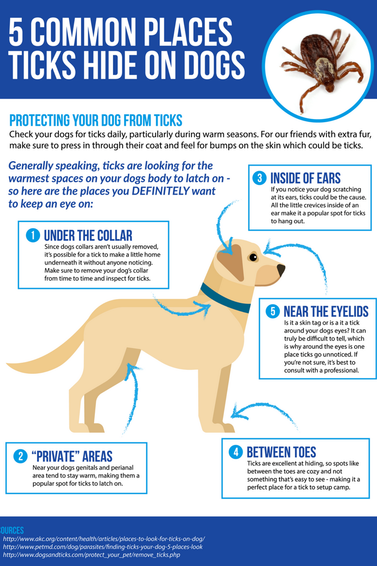 Learn More About Tick And Flea Prevention For Dogs Fleas