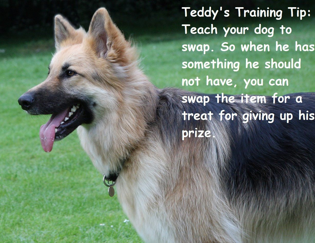 Obedience Training Dog Pet Dogs Tips Puppy Classes Dog