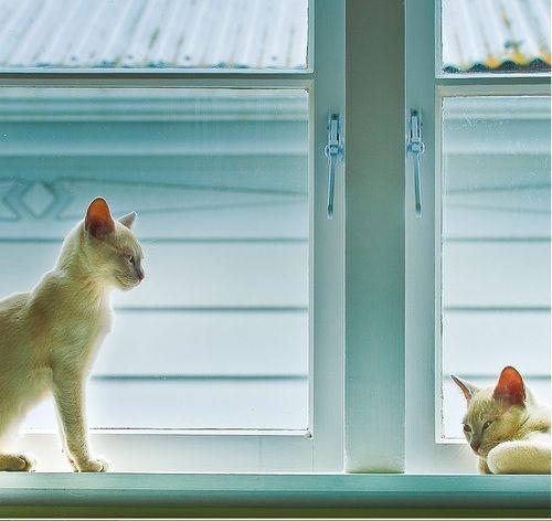Two ways to enjoy the sun