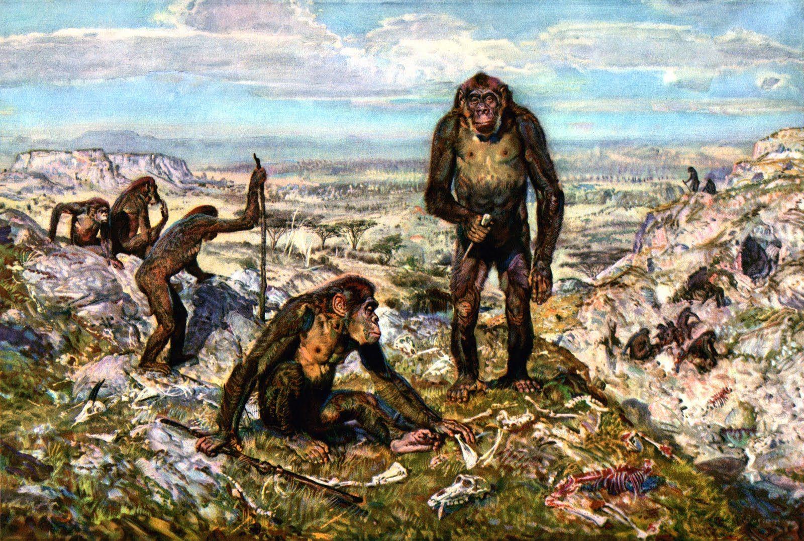 Australopithecinae By Zdenek Burian