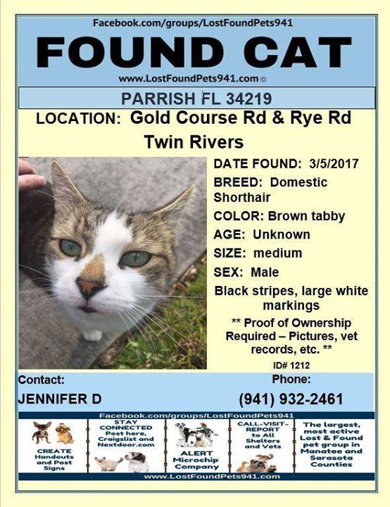 Found Cat Lostpets Lostcats Cat Foundcat Parrish Fl Please Rt Http Ift Tt 2mjvbvr Found Cat Losing A Pet Manatee County