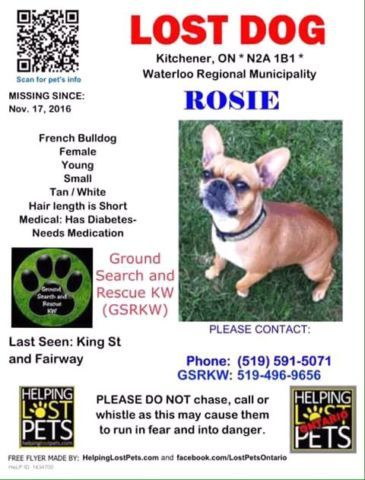 Missing Female French Bulldog Rosie Lost Found Kitchener