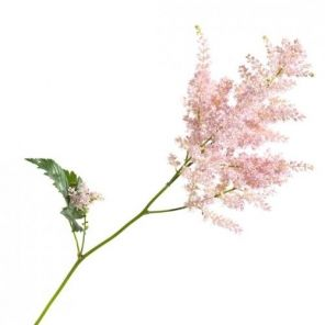Light Pink Erika Astilbe Wedding Flower Types Garden Wedding Bouquet Astilbe