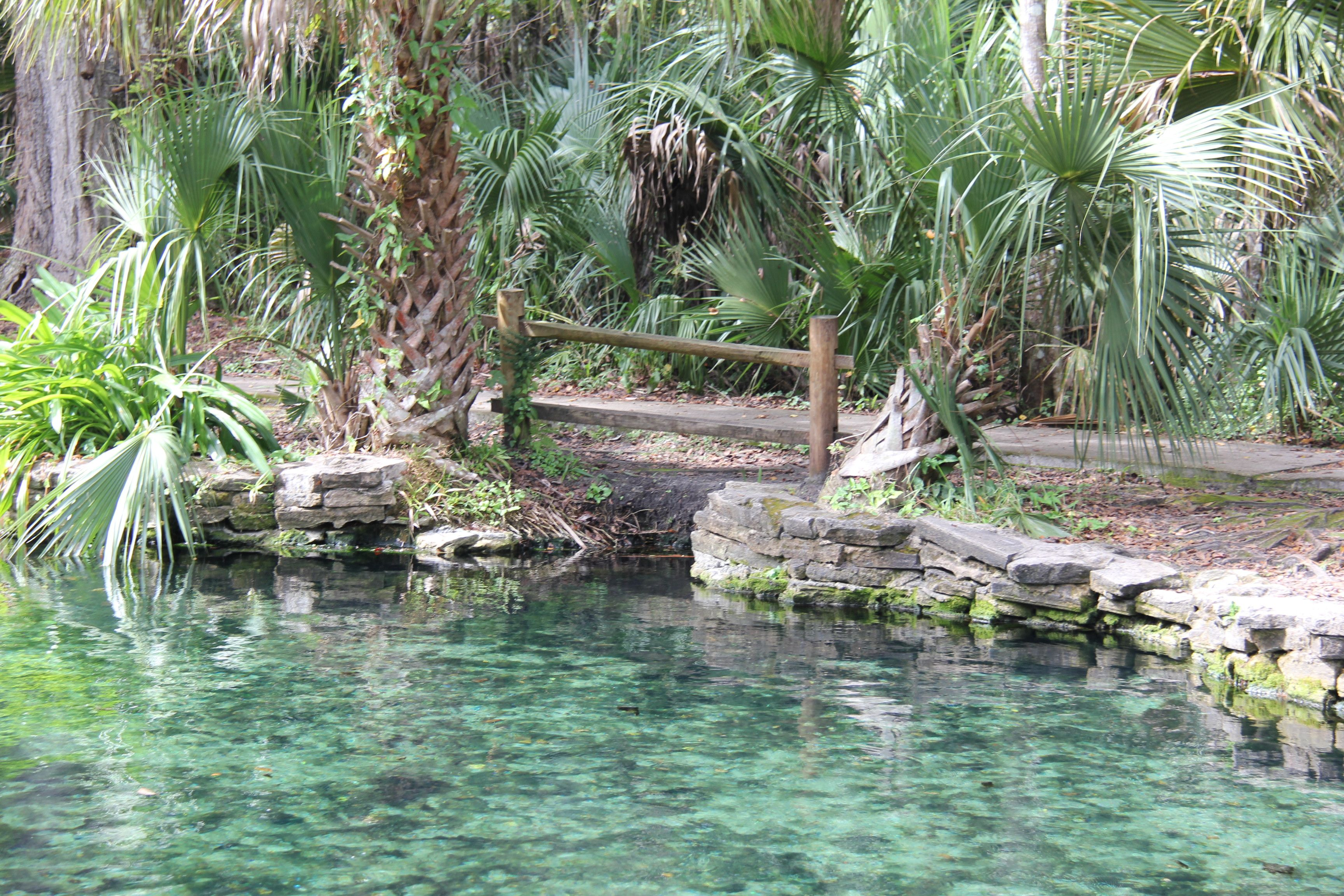 Wekiwa Springs' turquoise waters are beautiful and refreshing.
