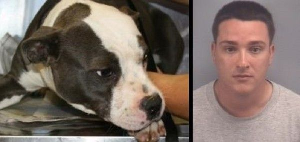 Dog Tied Up And Burned Alive In Virginia Beach Demand The Maximum Penalty For Arthur M Vieira Petitionhub Org