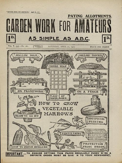 Garden Work For Amateurs How To Grow Vegetable Marrows April 21 1917 Price One Penny