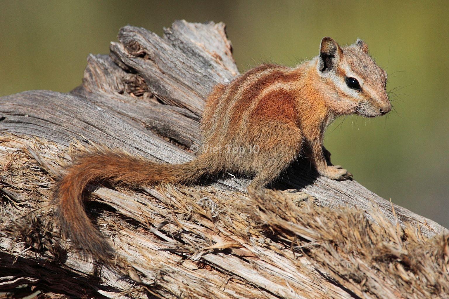 top 25 loài động vật có cách tự vệ và săn mồi độc đáo nhất hành tinh - việt top 10 - việt top 10 net - viettop10
