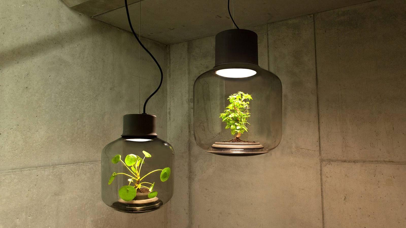 Lampen Fur Pflanzen Schaffen Sie Im Winter Optimale Bedingungen Pflanzenlampe Led Pflanzenlampe Und Kreative Lampen