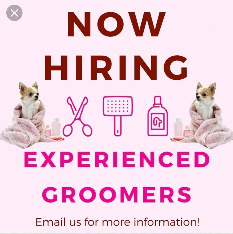 Calling All Groomers We Are A Growing Family Owned Dog Grooming Salon Located In The Streets Of Chester Shopping C With Images Dog Grooming Salons Groomer Doggie Style