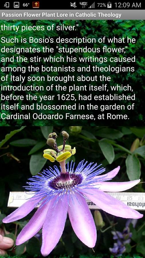 This App Contains The Lore Of The Passion Flower Or Passiflora Maypops Described By Catholic Theologians And Catholic Theology Theology Passion Flower Plant