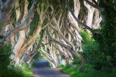 love tree tunell Ireland