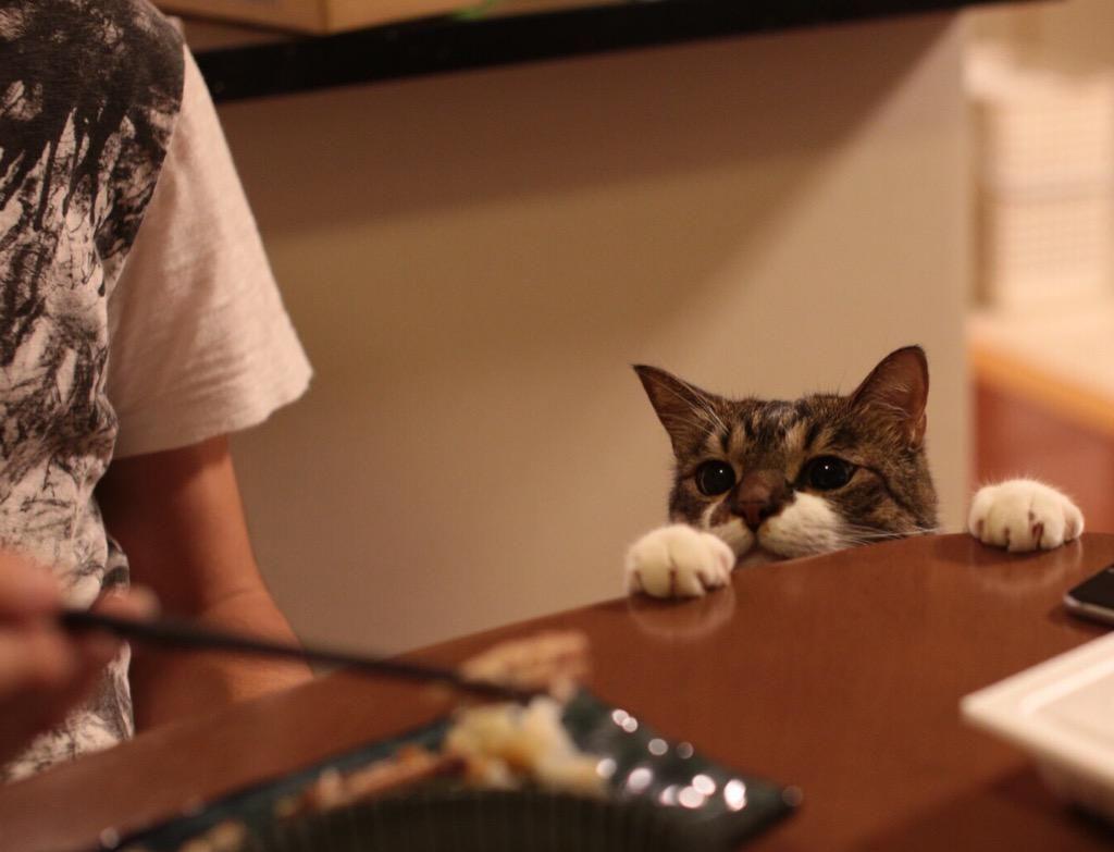 """ぽんちょさんはTwitterを使っています: """"お魚の匂いだにゃお! http://t.co/wKSgvT1B5n"""""""