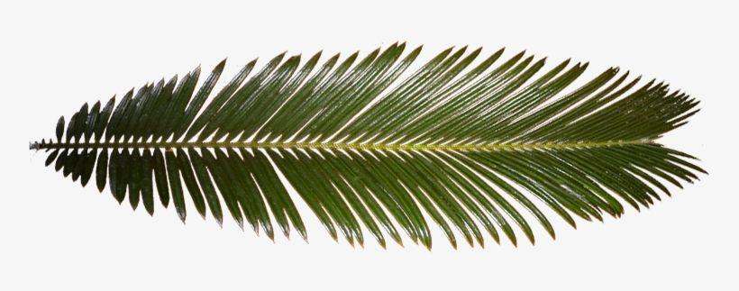 Palm Leaf Palm Tree Leaf Texture Palm Tree Leaves Leaf Texture Tree Leaves