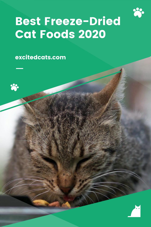 Best FreezeDried Cat Foods 2020 in 2020 Cats, Cat food