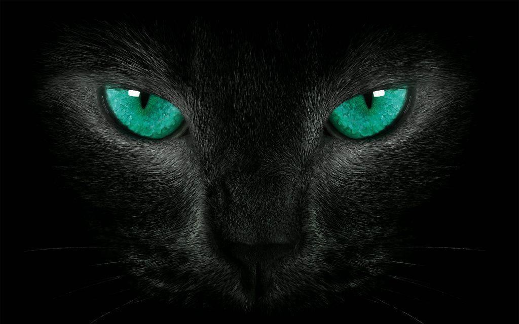 Black Cat Green Eyes By Welshdragon On Deviantart Black Cat Fireworks Cat Greens Black Cat Tattoos