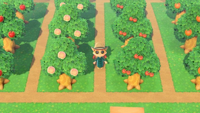 Orchard Fruit Garden Layout Animal Crossing Fruit Trees