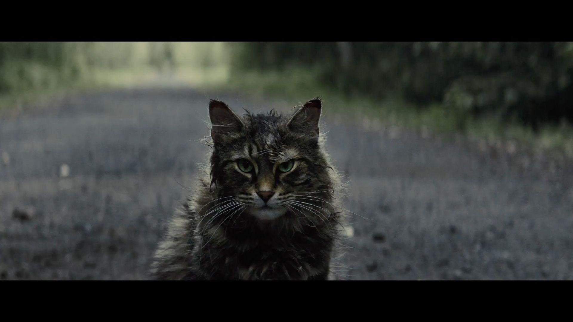 PET SEMATARY The Art of VFX Pet sematary, Cats, Pets