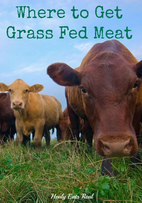 Where to Get Grass Fed and Pasture Raised Meat @ Healy Eats Real