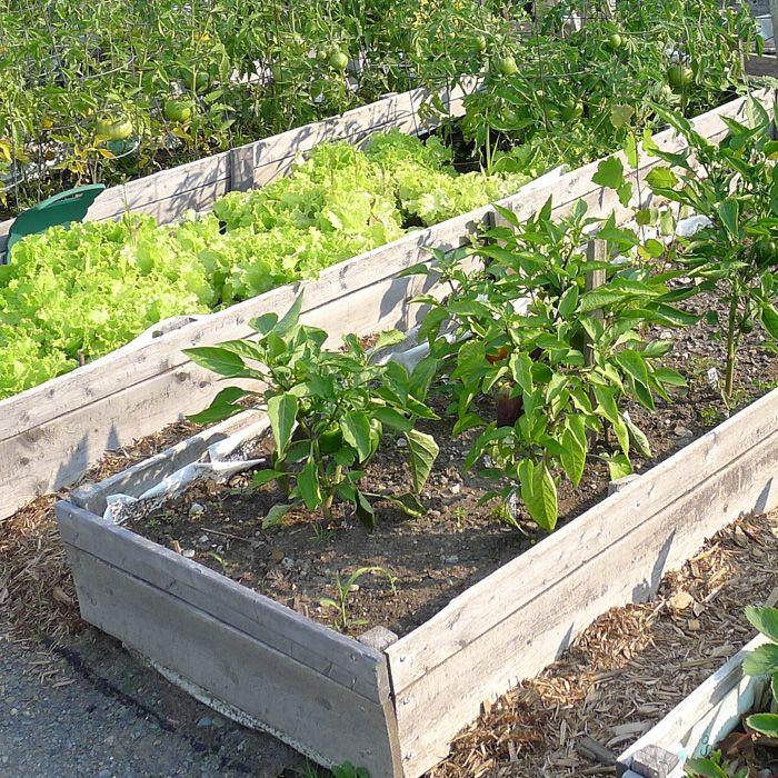 Enjoy Fresh Produce From Your Backyard Vegetable Garden