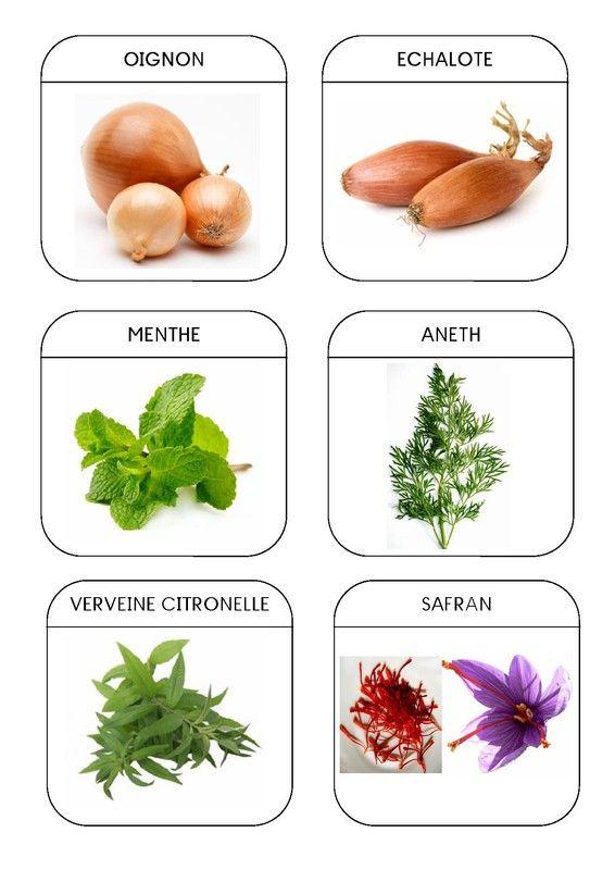 Imagier du jardin les plantes aromatiques 2 montessori for Plantes aromatiques