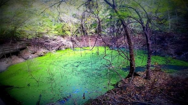 Devil's Millhopper Geological State Park, Gainesville, Florida — by Lost Girls. At the bottom of a 120' deep sinkhole (you will have to take a 232 step staircase down) is this little gem. Keep your...