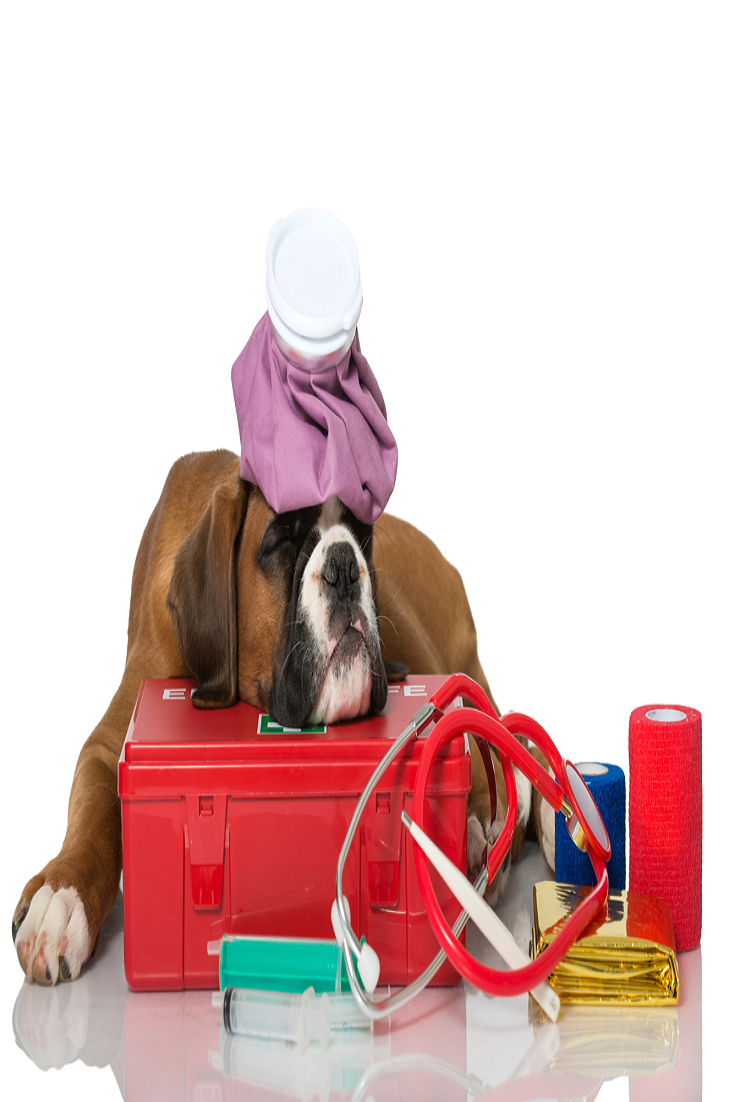 What to Include in Your Dog's First Aid Kit? Pet