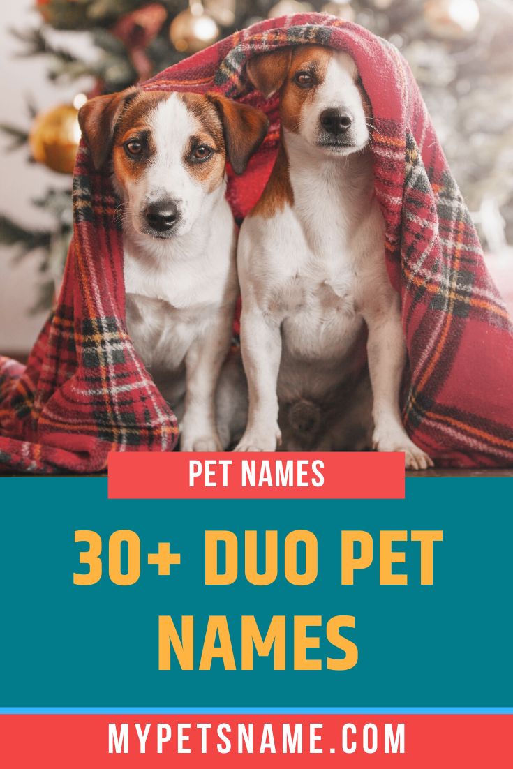 Duo Pet Names In 2020 Disney Pet Names Pet Names Cute Pet Names