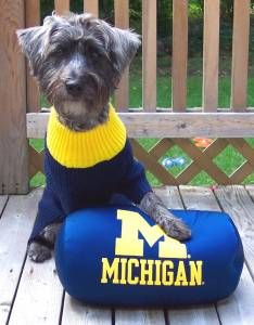 Go Michigan Sophie Bean Schnoodle Photo Taken By N Hornberger
