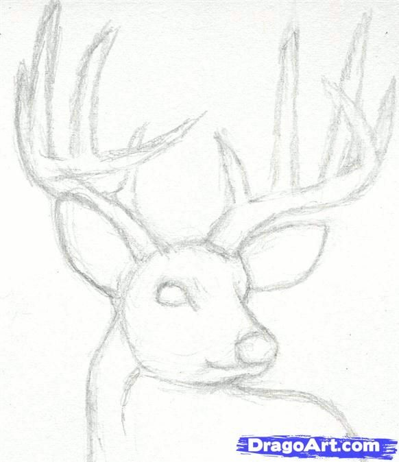 How To Draw A Deer Head Buck Dear Head Step By Step Realistic Drawing Technique Free Online Drawing Tutorial Sketches Realistic Drawings Online Drawing