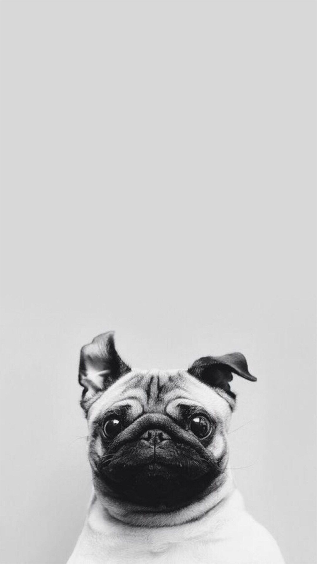Funny Puppy Dog Simple Macro iPhone 8 Wallpapers