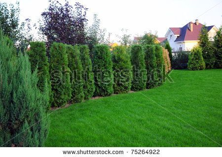 Charming Garden With Small Pine Trees In Front Of A Villa House   Stock Photo