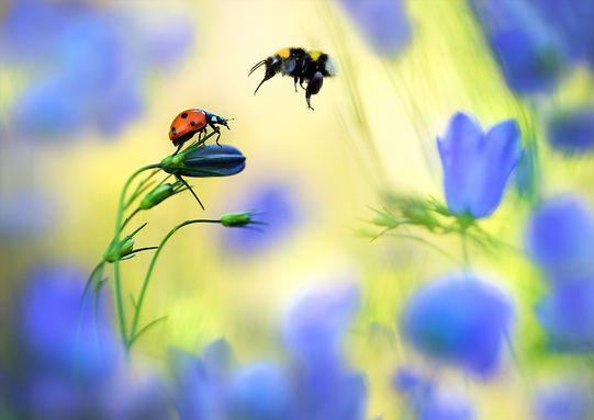 Bluebell Vally by Tammy Bergstrom.