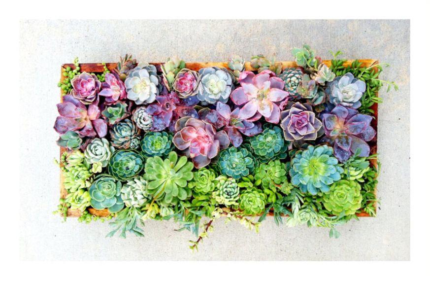 Living Wall   Succulents