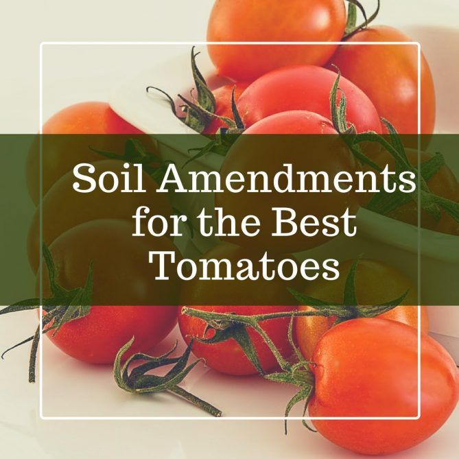 Soil For Tomatoes: Soil Amendments For Tomatoes