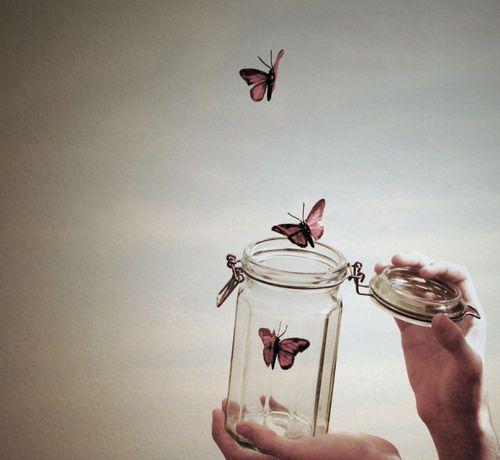 Flutterbyy <3