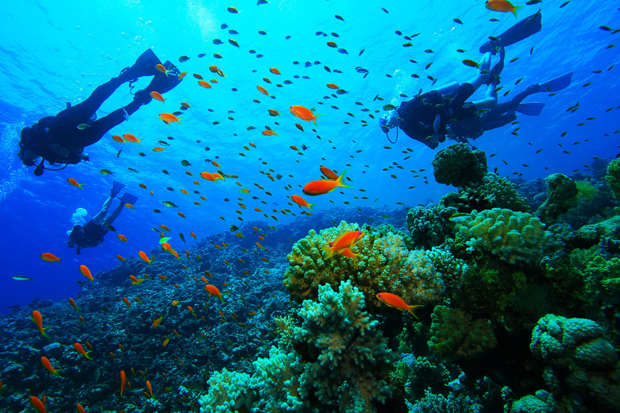 Scuba diving #Greece