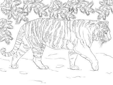 Siberian Tiger Coloring Page Supercoloring Com Dinosaur Coloring Pages Animal Coloring Pages Cat Coloring Page