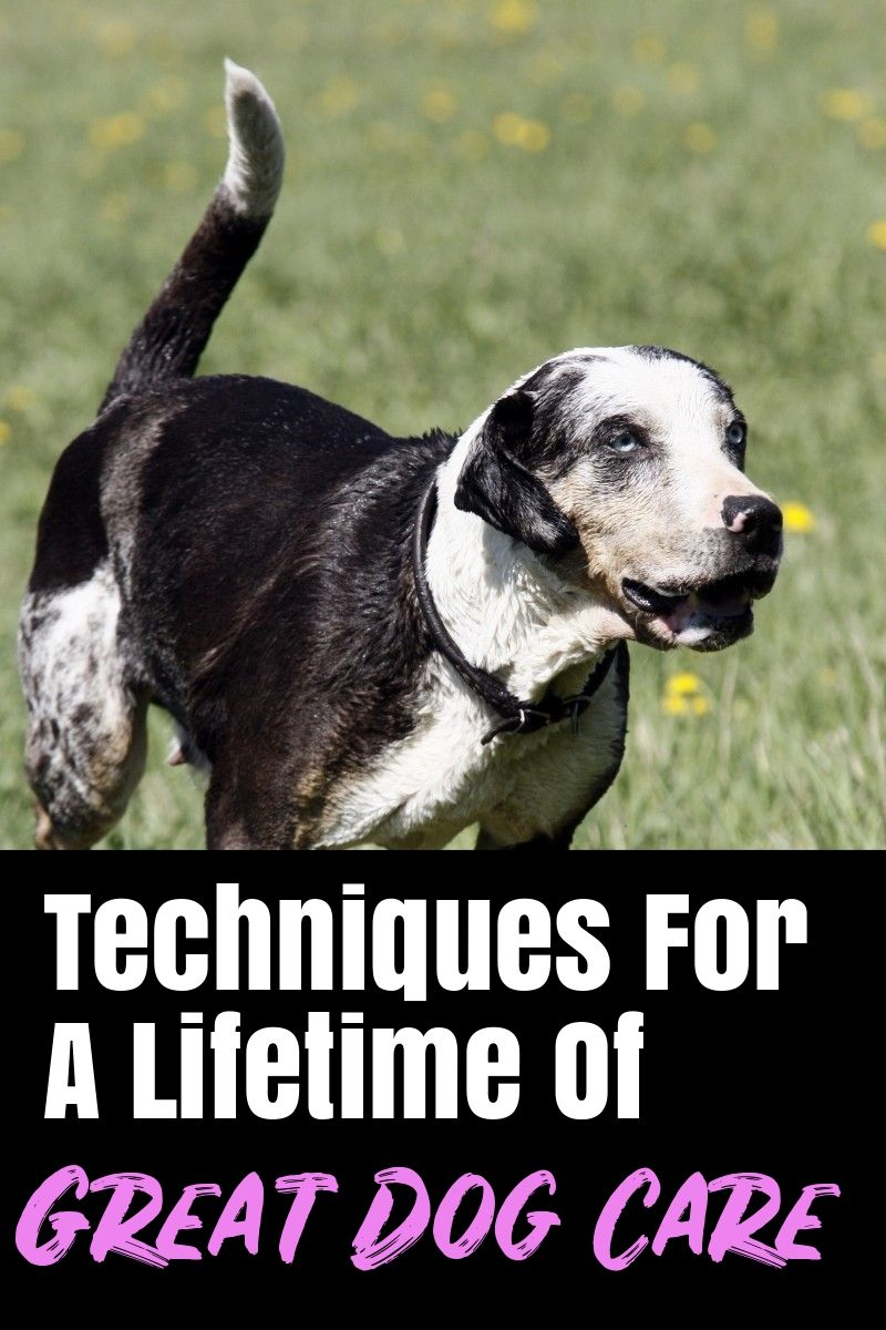 Easy Ways To Improve Your Life With Your Dogs Your dog