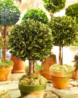 Tiny Topiaries With Images Topiary Garden Topiary Plants