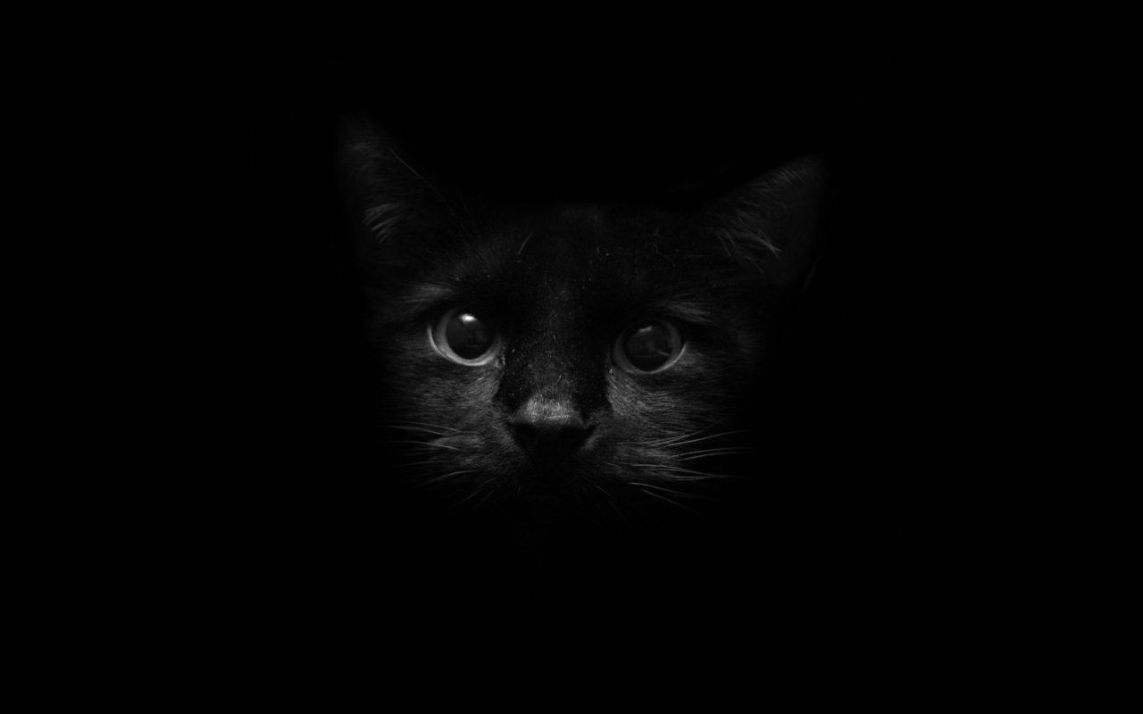 Black And White Cat Wallpaper Animal Wallpapers 47226